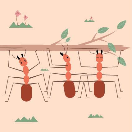 Mier illustratie - boek ontwerp - grafisch ontwerper - Charlotte Heijmans