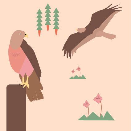Buizerd illustratie - kinderboek - illustrator Charlotte Heijmans
