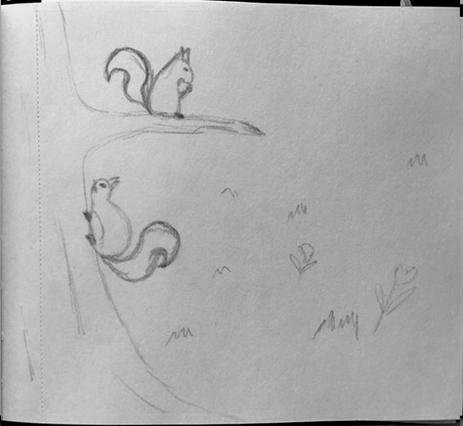 Schets eekhoorn - kinderboekje - illustrator Charlotte Heijmans